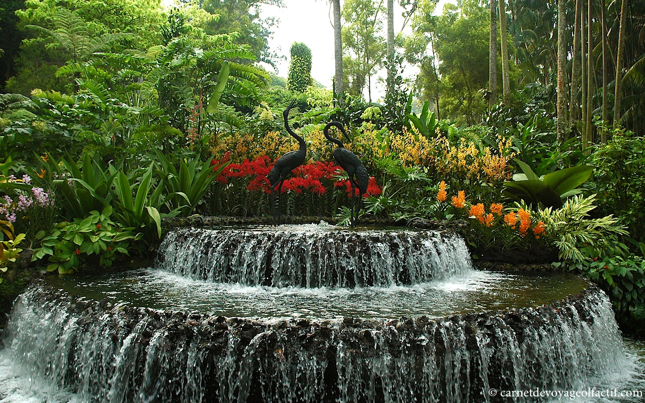 Le Jardin National Des Orchidées, Singapour – Scent Corner ... encequiconcerne Fontaine Naturelle Jardin