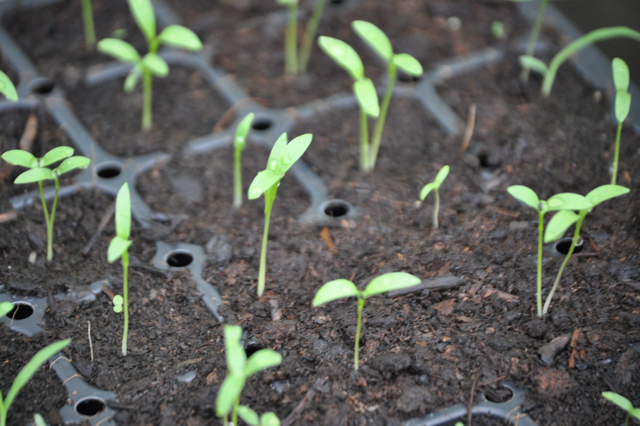 Le Jardin Potager Se Prépare Dès Février ! destiné Semoir Jardin Potager
