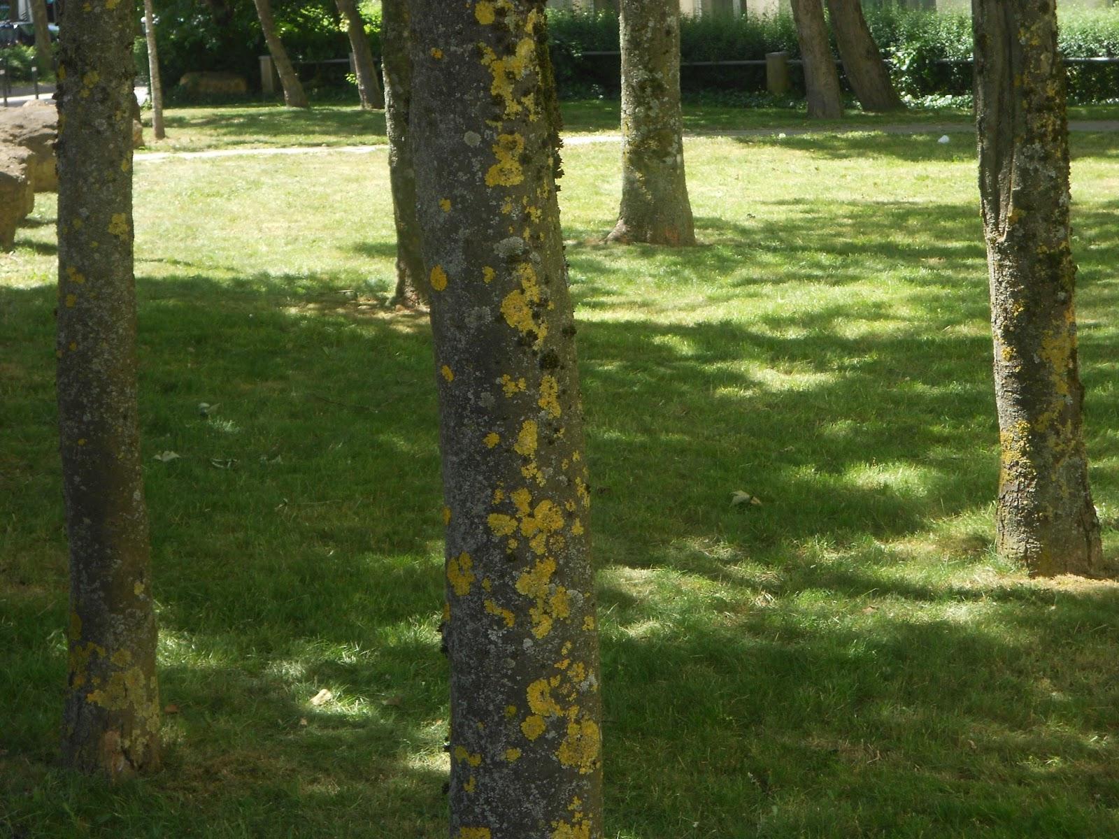 Le Jardin Sauvage Ana Nb: Le Silence De L' Écorce encequiconcerne Ecorces Jardin