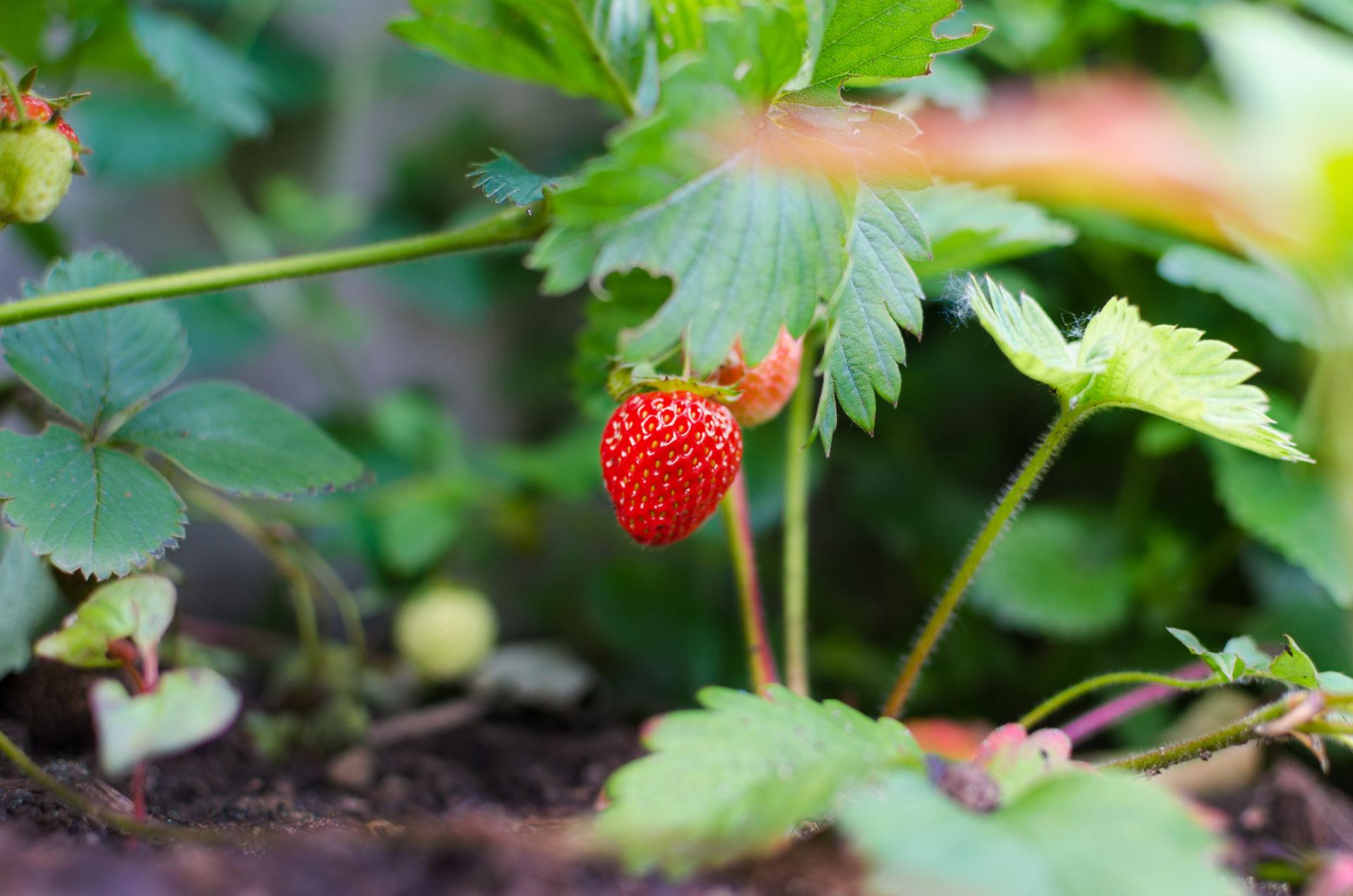 Le Jardinage Pour Les Nuls En 5 Innovations - Blog Noova ... encequiconcerne Jardiner Pour Les Nuls