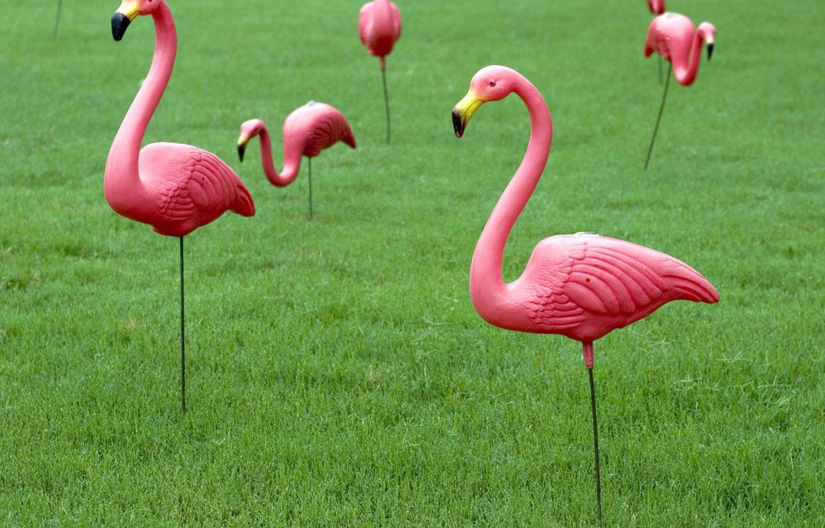 Le Père Des Flamants Roses En Plastique N'est Plus | Le Devoir à Flamant Rose Jardin