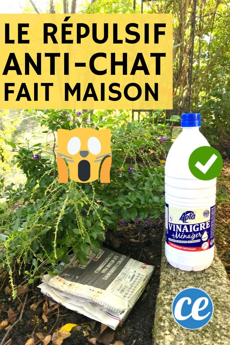 Le Répulsif Naturel Et Très Efficace Que Tous Les Chats ... serapportantà Repulsif Chat Jardin