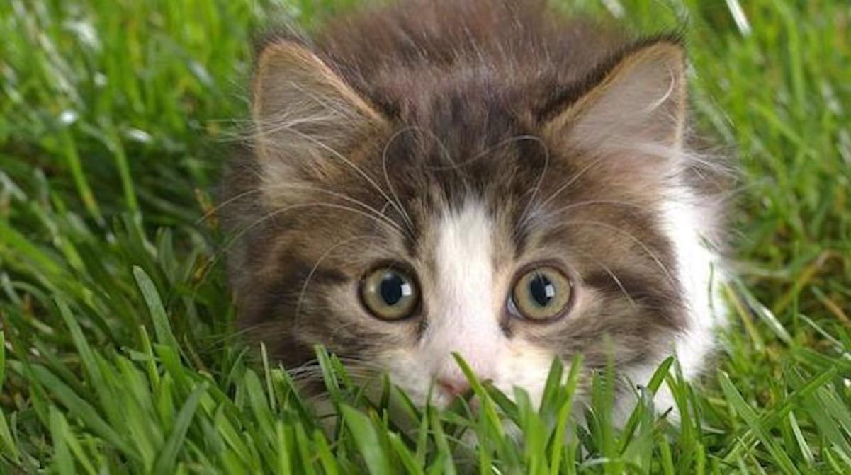 Le Répulsif Naturel Qui Marche Pour Faire Fuir Les Chats Du ... concernant Chasser Les Chats Du Jardin