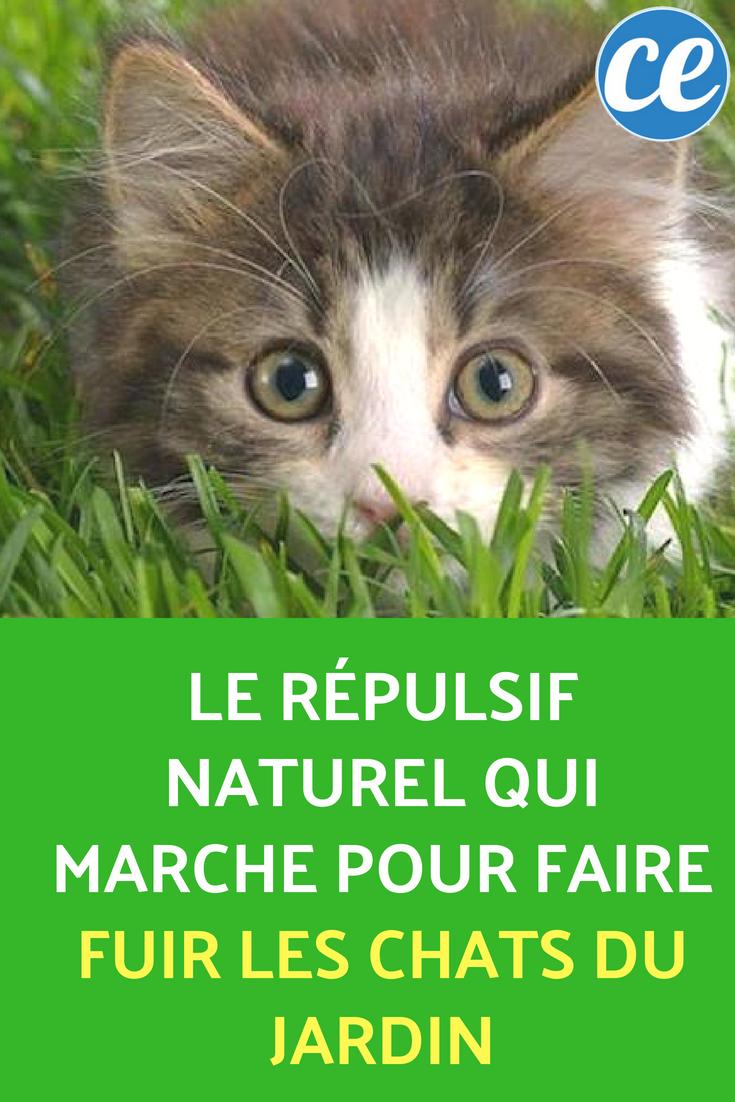 Le Répulsif Naturel Qui Marche Pour Faire Fuir Les Chats Du ... serapportantà Repulsif Chat Jardin