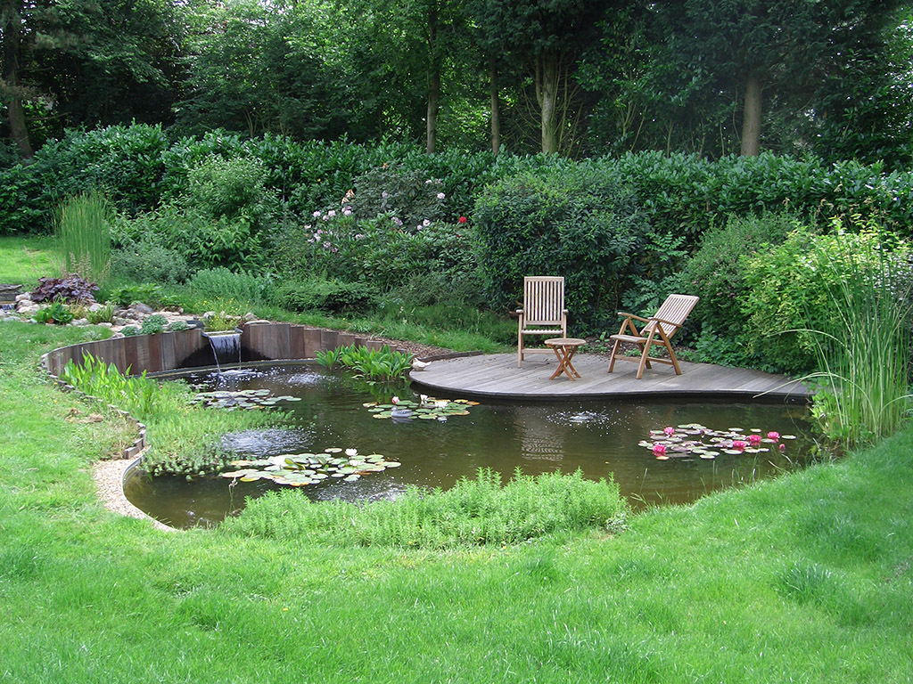 Le Rôle Des Plantes Aquatiques Pour Le Bassin pour Plante Bassin De Jardin