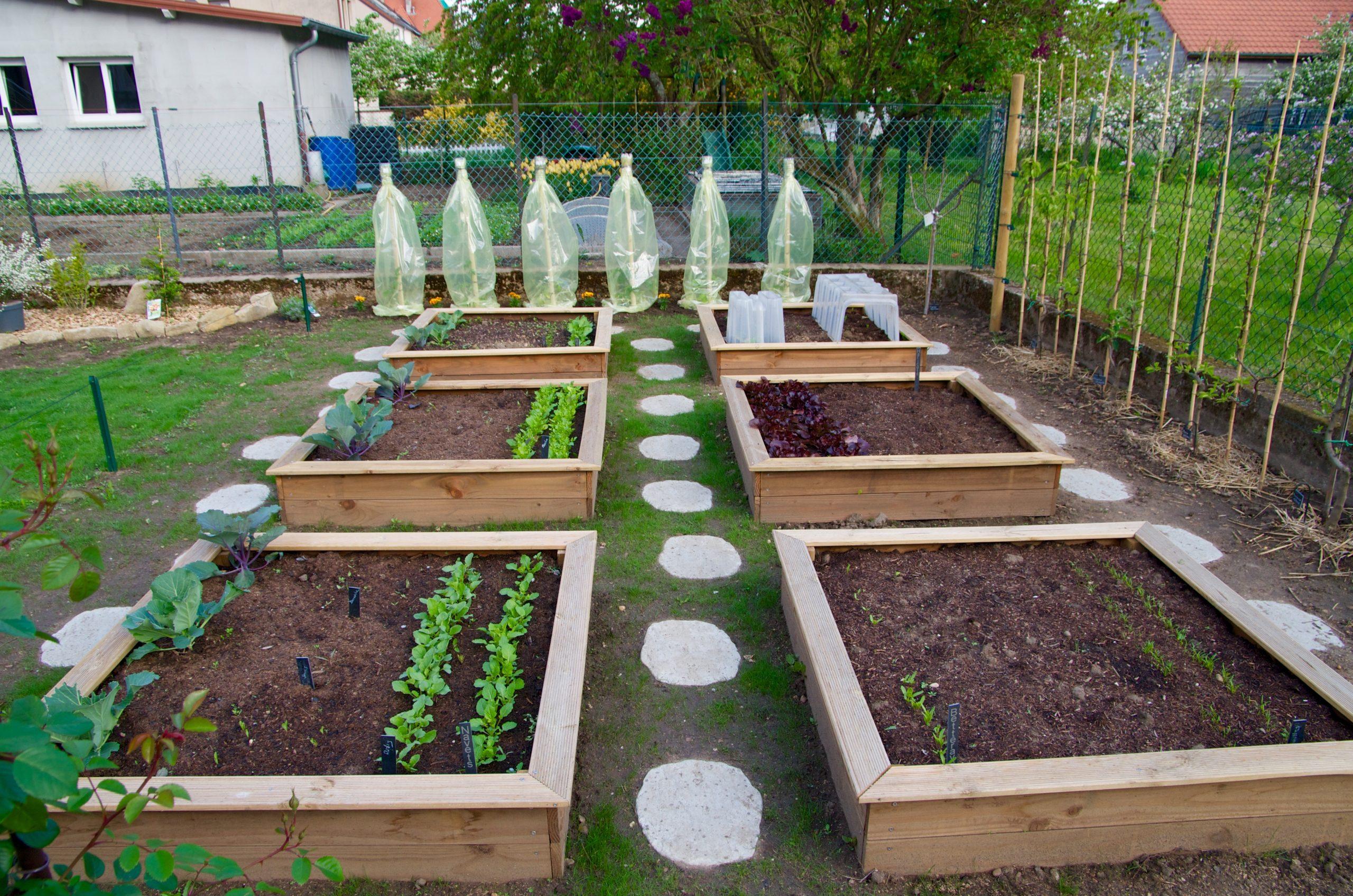 Le Top 5 Des Fruits Et Légumes À Cultiver Dans Son Jardin ... avec Jardin Au Carré