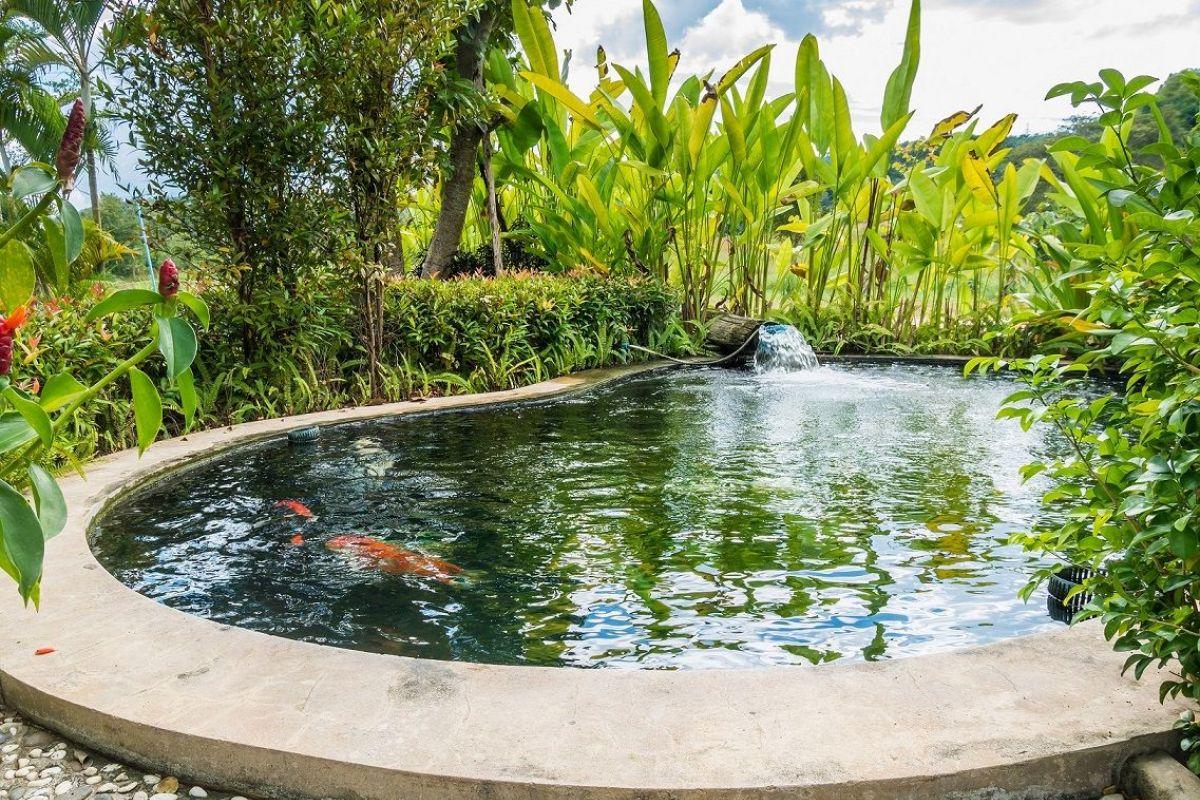 L'entretien D'un Bassin De Jardin En Automne Et En Hiver dedans Accessoires Pour Bassin De Jardin
