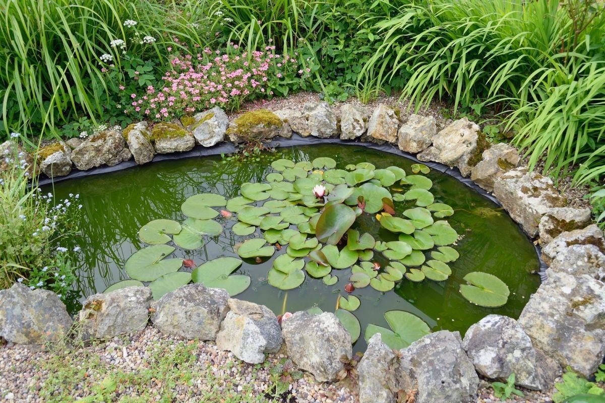 L'entretien D'un Bassin D'ornement Dans Le Jardin dedans Entretien D Un Bassin De Jardin
