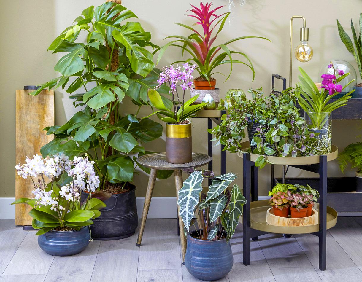 Les 12 Plantes Vertes D'intérieur Les Plus Faciles | Détente ... pour Détente Jardin Abonnement