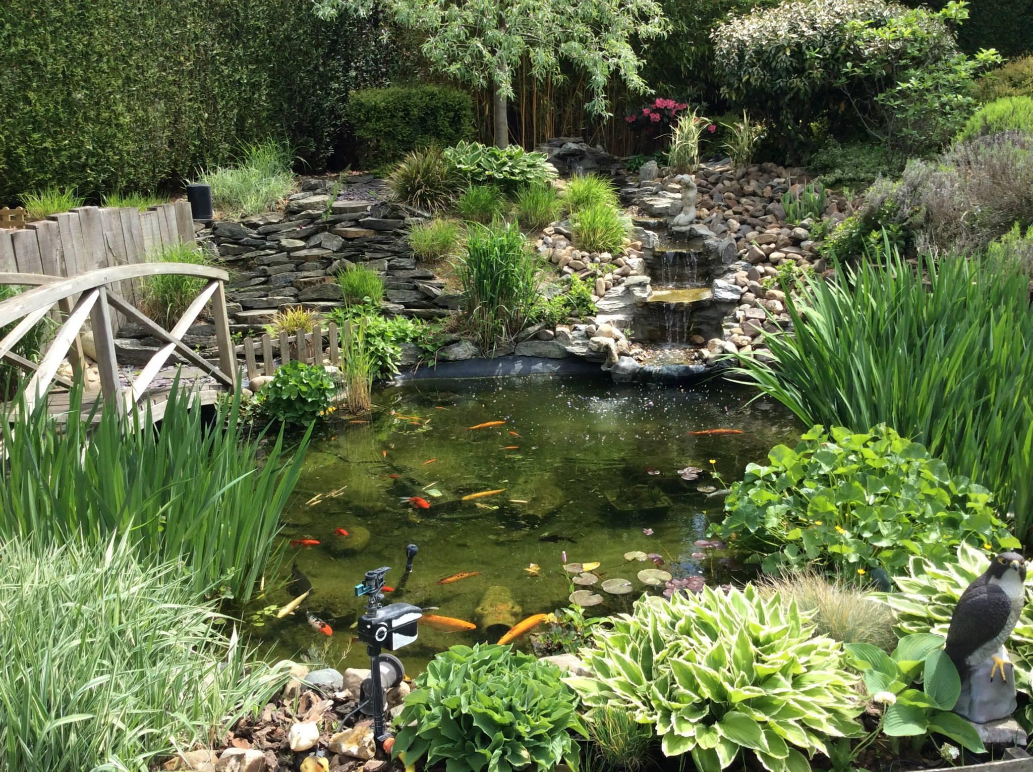Les 15 Plus Beaux Bassins Découverts Lors Du Concours ... à Entretien D Un Bassin De Jardin