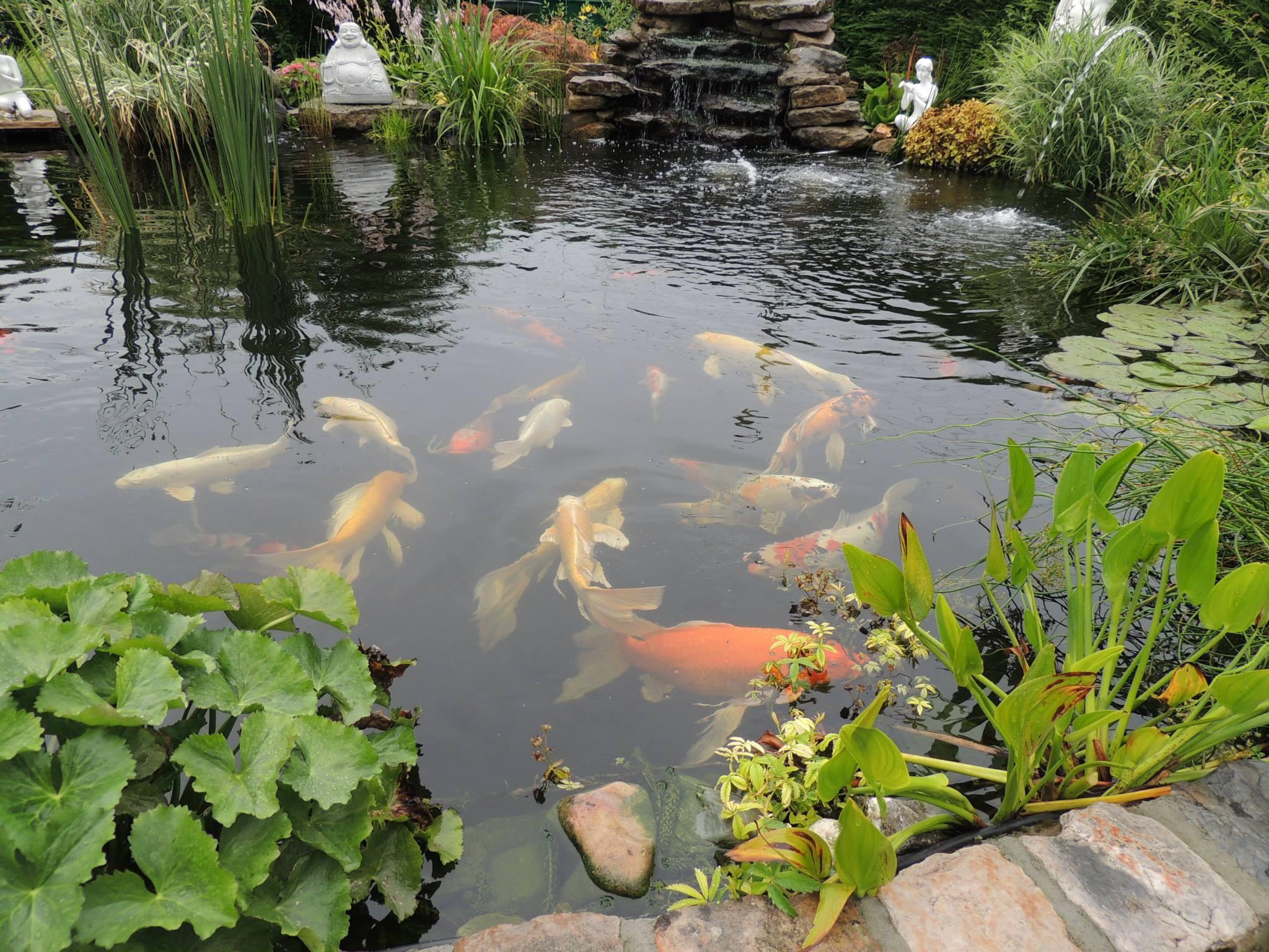 Les 15 Plus Beaux Bassins Découverts Lors Du Concours ... intérieur Bac Poisson Jardin