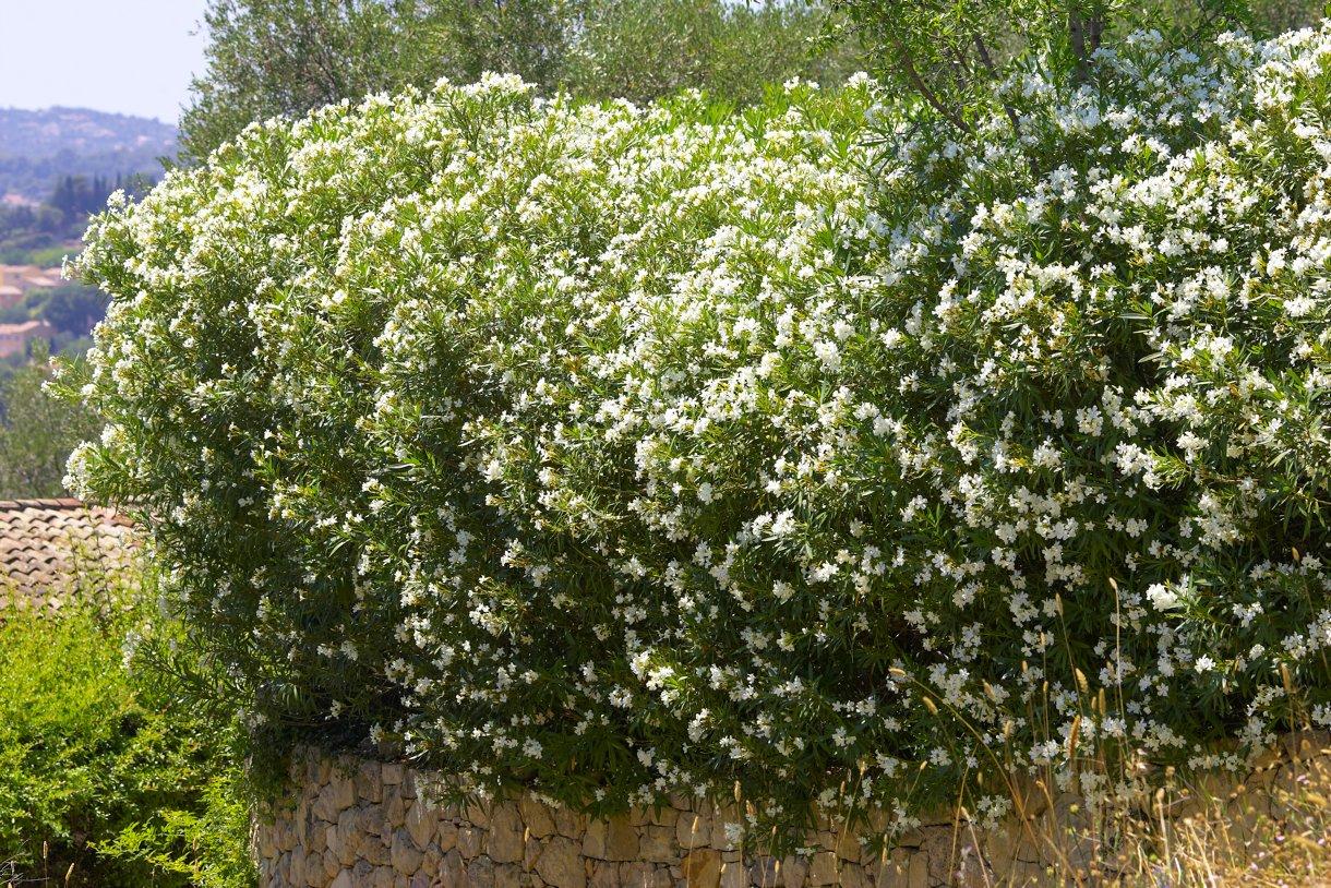 Les 6 Plantes À Privilégier Pour Une Haie De Jardin ... serapportantà Buisson Pour Jardin