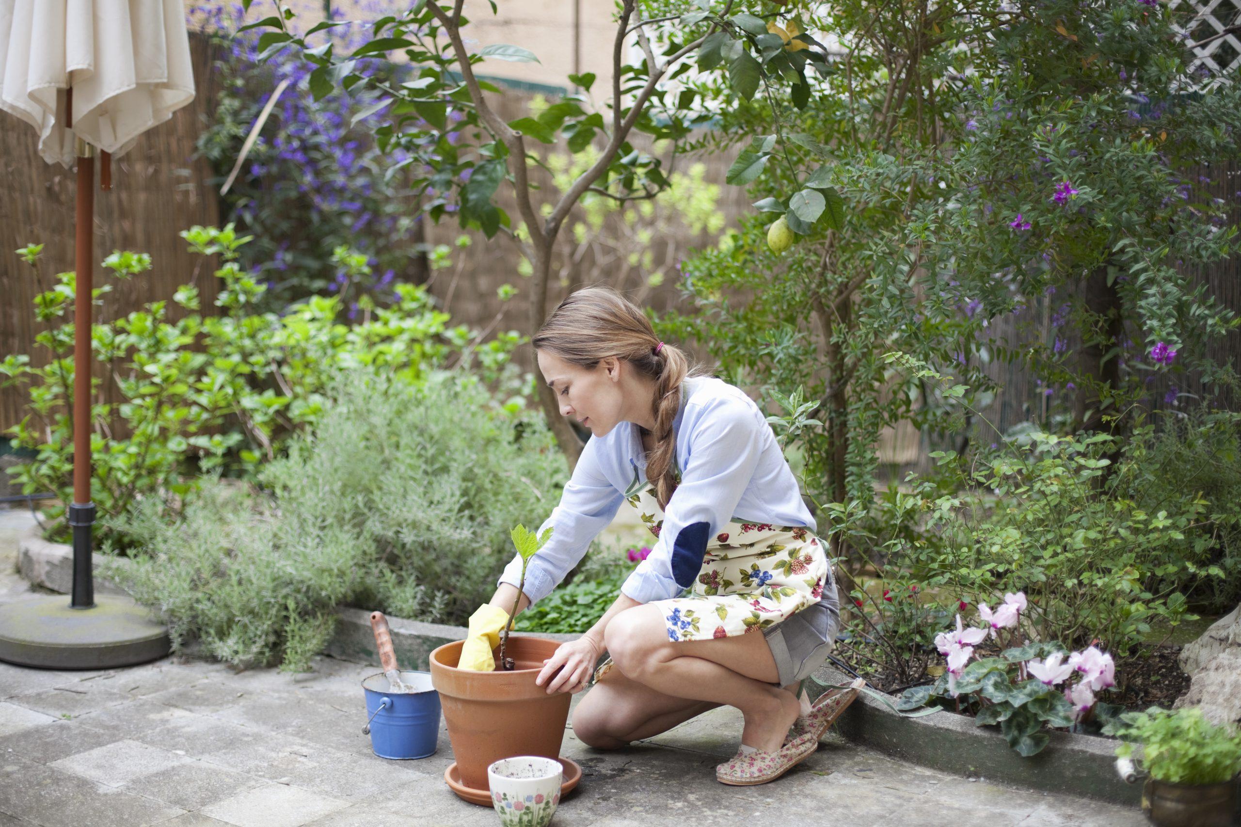 Les Arbustes Pour Mon Petit Jardin pour Buisson Pour Jardin