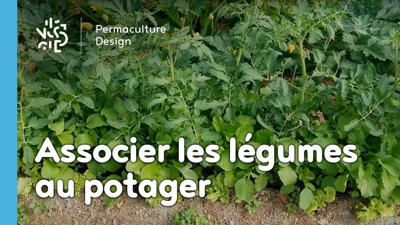 Les Associations De Légumes Dans Un Potager En Permaculture. pour Organisation D Un Jardin Potager