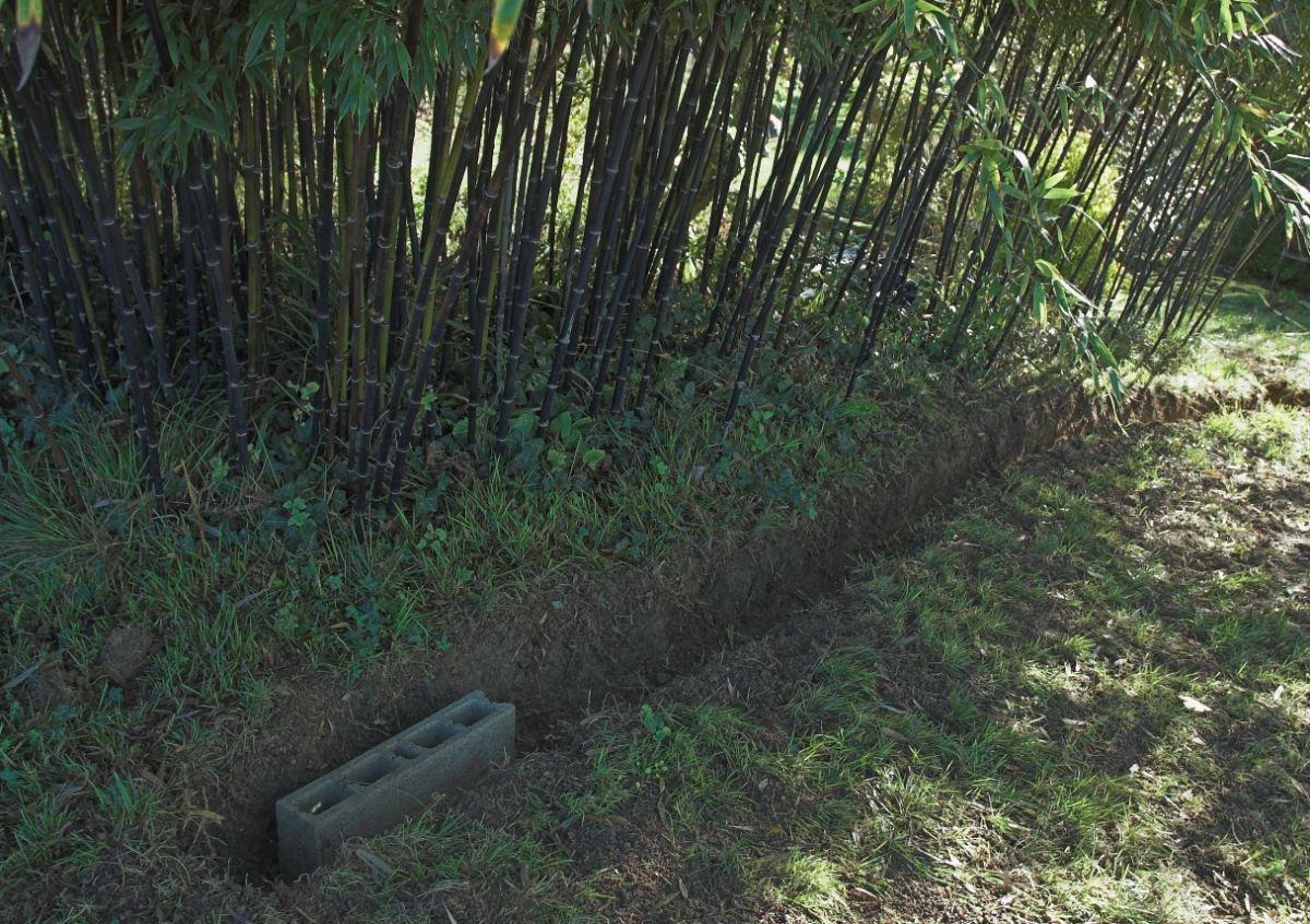 Les Bambous D'en Galinou, Anti-Rhizome, Suite - Le Journal D ... tout Comment Eliminer Les Bambous Dans Un Jardin