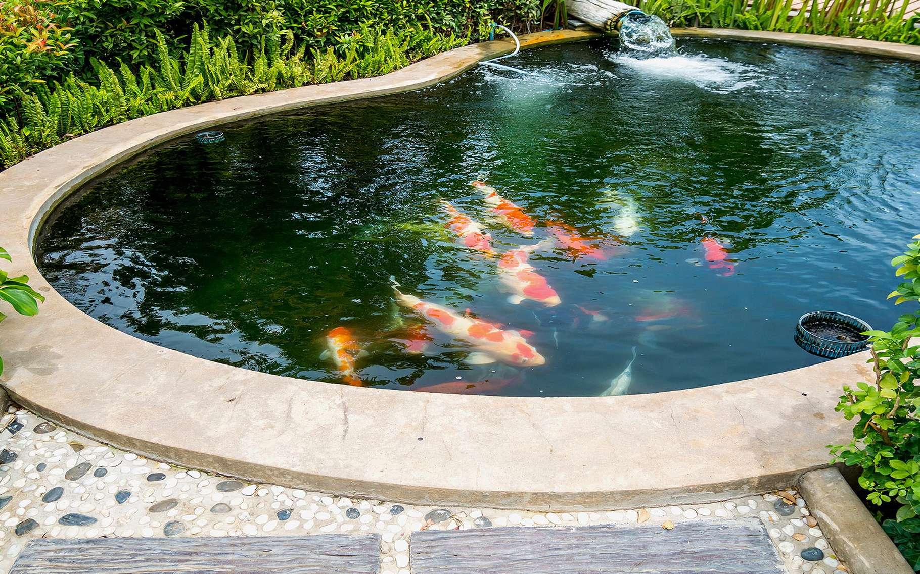 Les Bassins De Jardin En Béton   Dossier intérieur Bassin De Jardin Pour Poisson