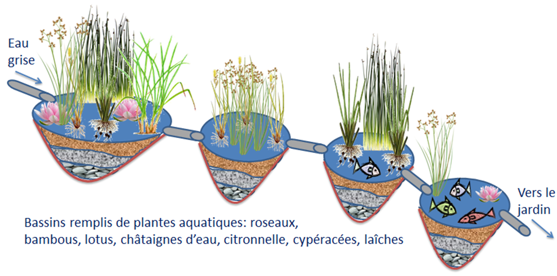 Les Bassins De Traitement De L'eau Usée   La Liberté De ... intérieur Plante Bassin De Jardin