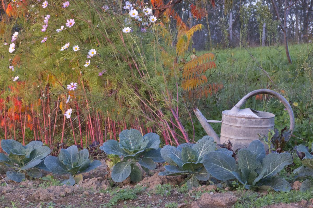 Les Bonnes Pratiques Et Conseils D'arrosage avec Faux Outil De Jardin
