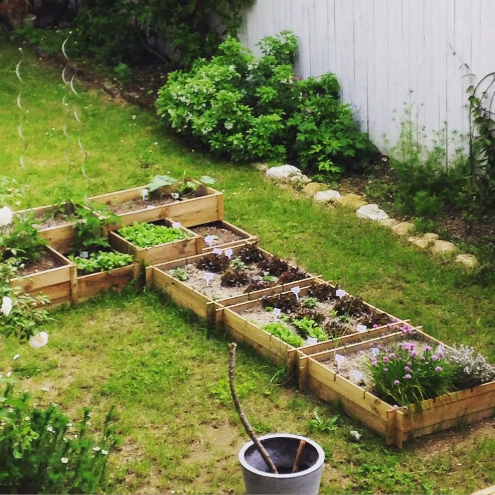 Les Carrés Potagers Du Petit Jardin - Mes Petits Jardins ... intérieur Jardin Au Carré