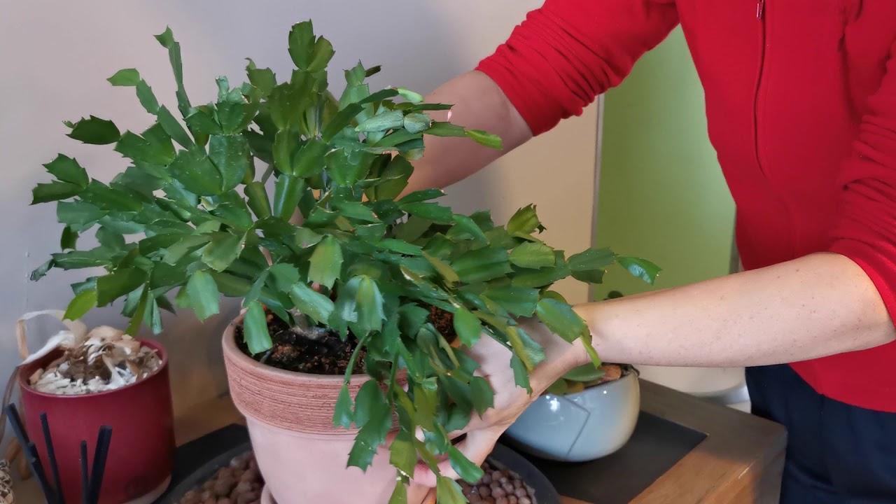 Les Compagnons Des Saisons - Bain De Bretagne tout Gamm Vert Salon De Jardin
