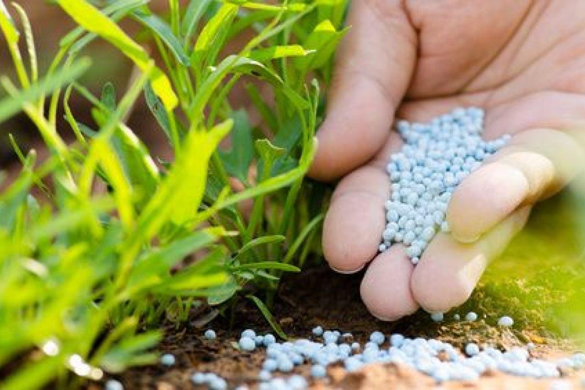 Les Engrais Chimiques Pour Jardin : Les Dangers avec La Potasse Au Jardin