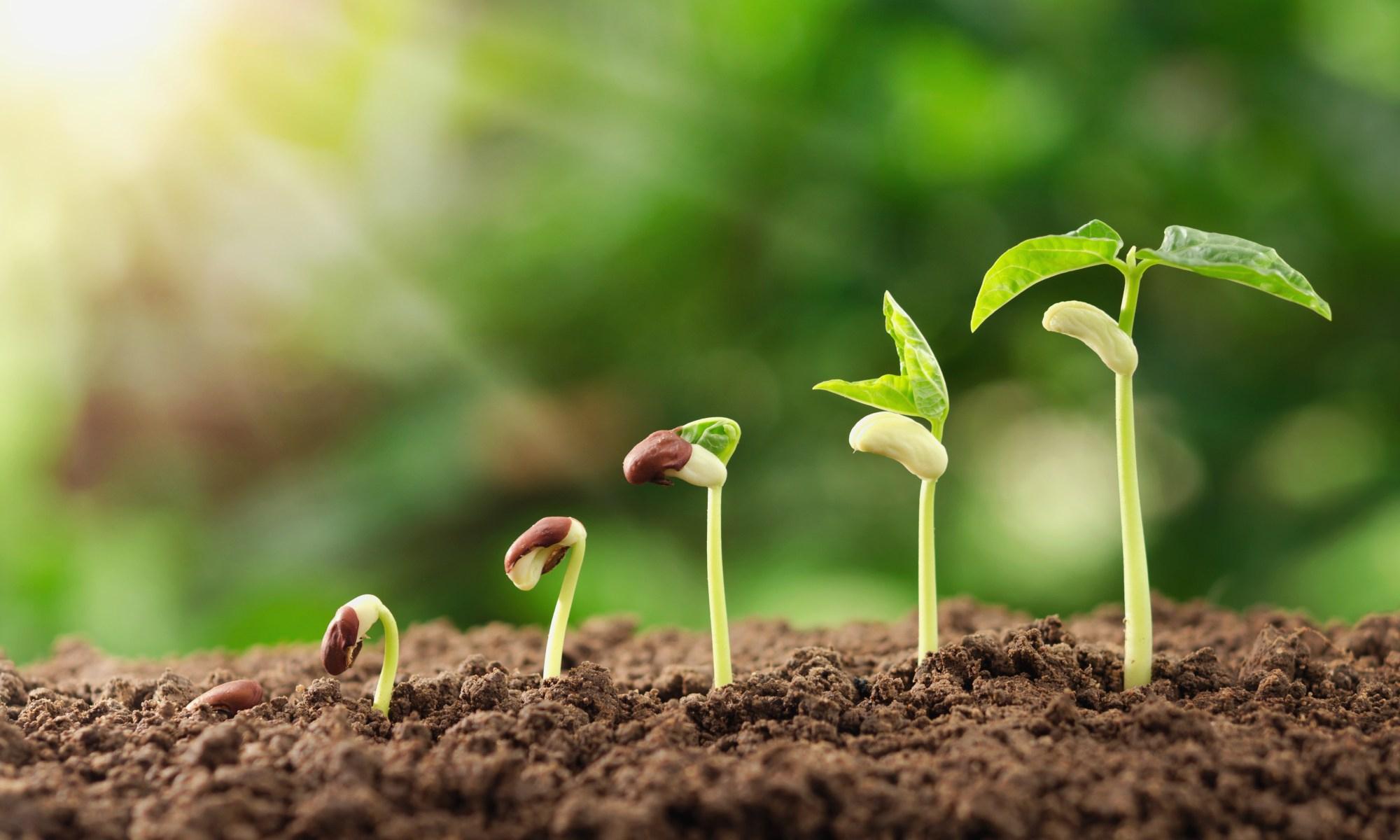 Les Engrais Pour Une Meilleure Croissance Des Plantes   Déco ... intérieur La Potasse Au Jardin