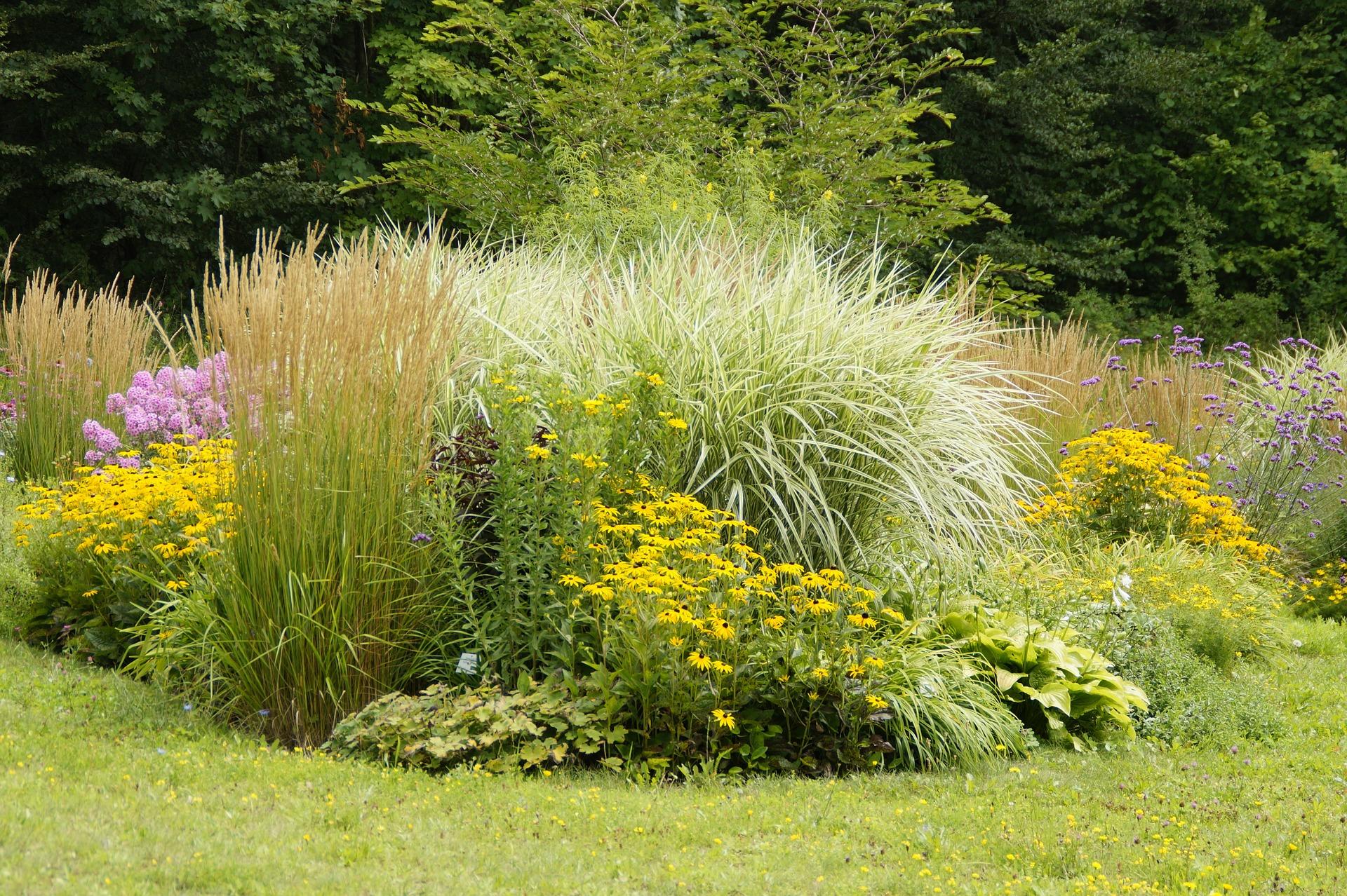 Les Graminées, Des Plantes Dans Le Vent pour Amenagement Jardin Avec Graminees