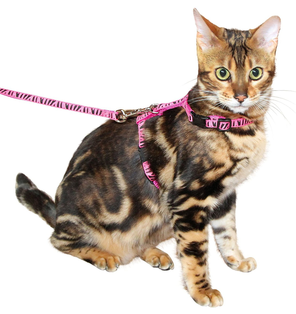 Les Meilleurs Harnais Pour Promener Votre Chat intérieur Repulsif Chat Jardin