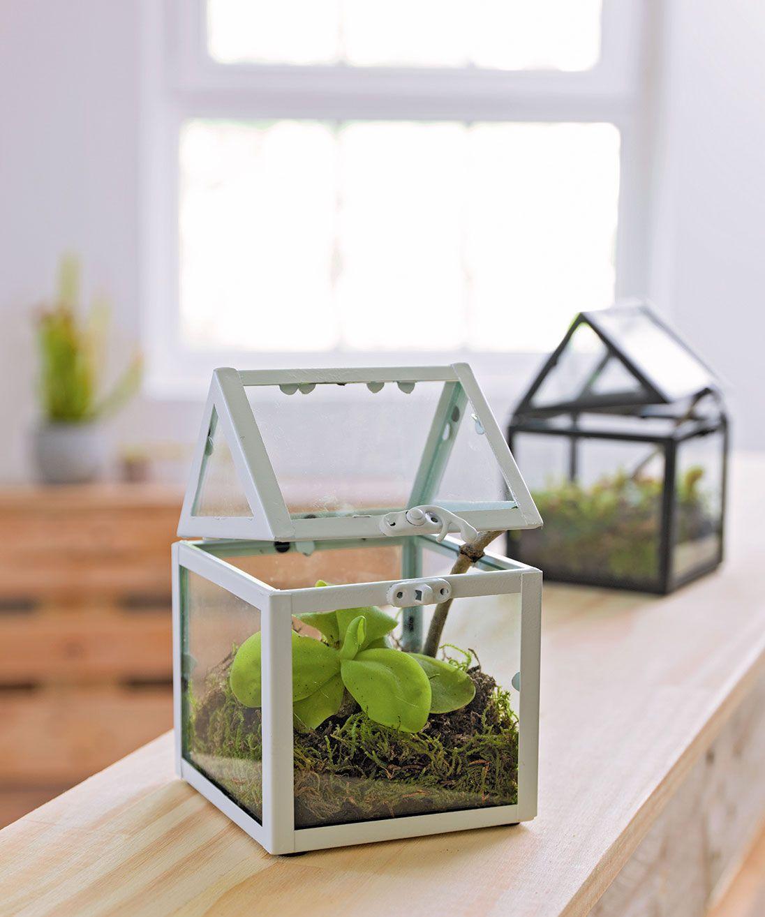 Les Mini Serres Sont Parfaites Pour Sublimer Votre Déco ... serapportantà Petites Serres De Jardin
