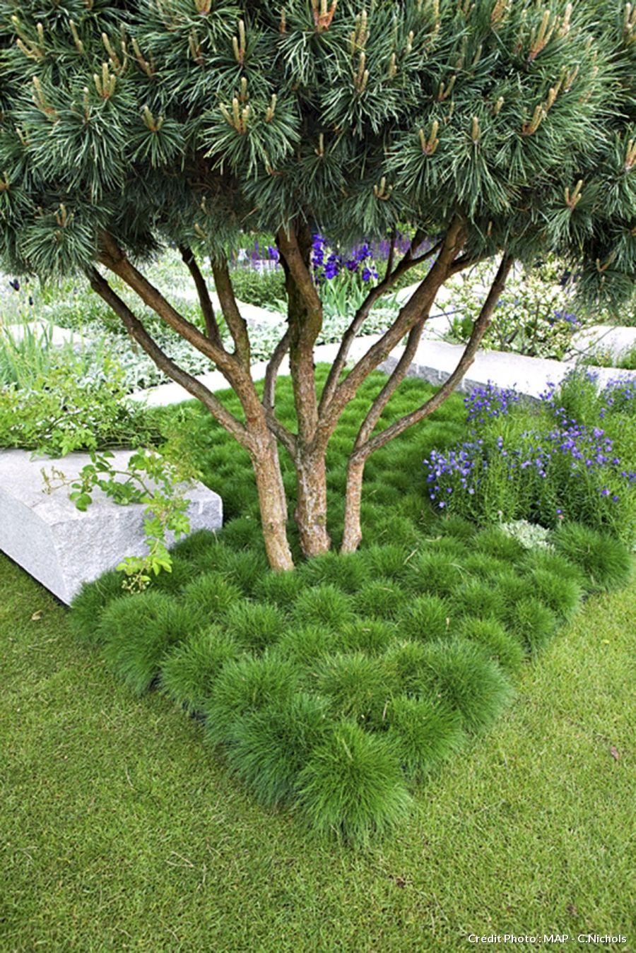 Les Plantes À Installer Sous Les Arbres | Mimo's Garden ... destiné Arbre Persistant Pour Petit Jardin