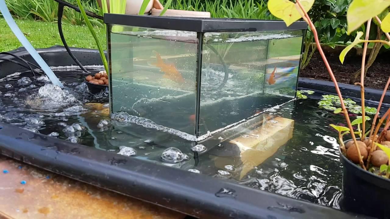 Les Poissons Vont Et Viennent Du Bassin À L'Aquarium concernant Bac Poisson Jardin