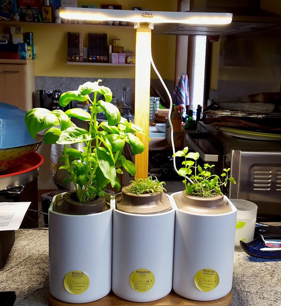 Lilo, Le Jardin D'intérieur By Prêt À Pousser - Nipette à Jardin En Kit Pret A Planter