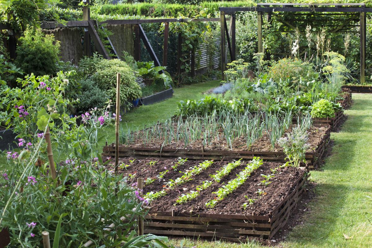 Locataire : Pouvez-Vous Transformer Le Jardin En Potager ? pour Plan Jardin Potager Bio