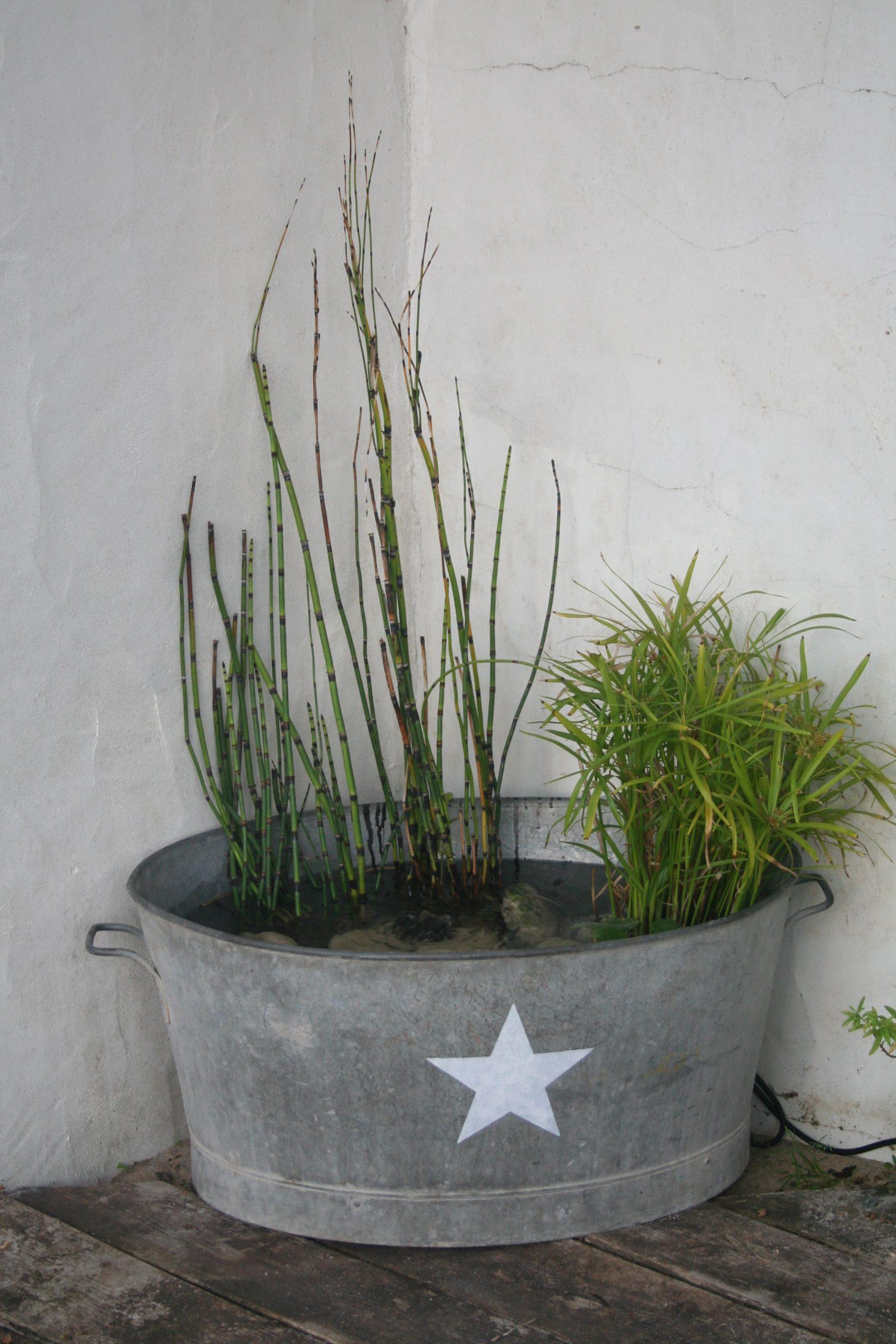 Ma Petite Fontaine Avec Papyrus, Prêle Et Jacinthe D'eau. Et ... tout Jet D Eau Pour Fontaine De Jardin