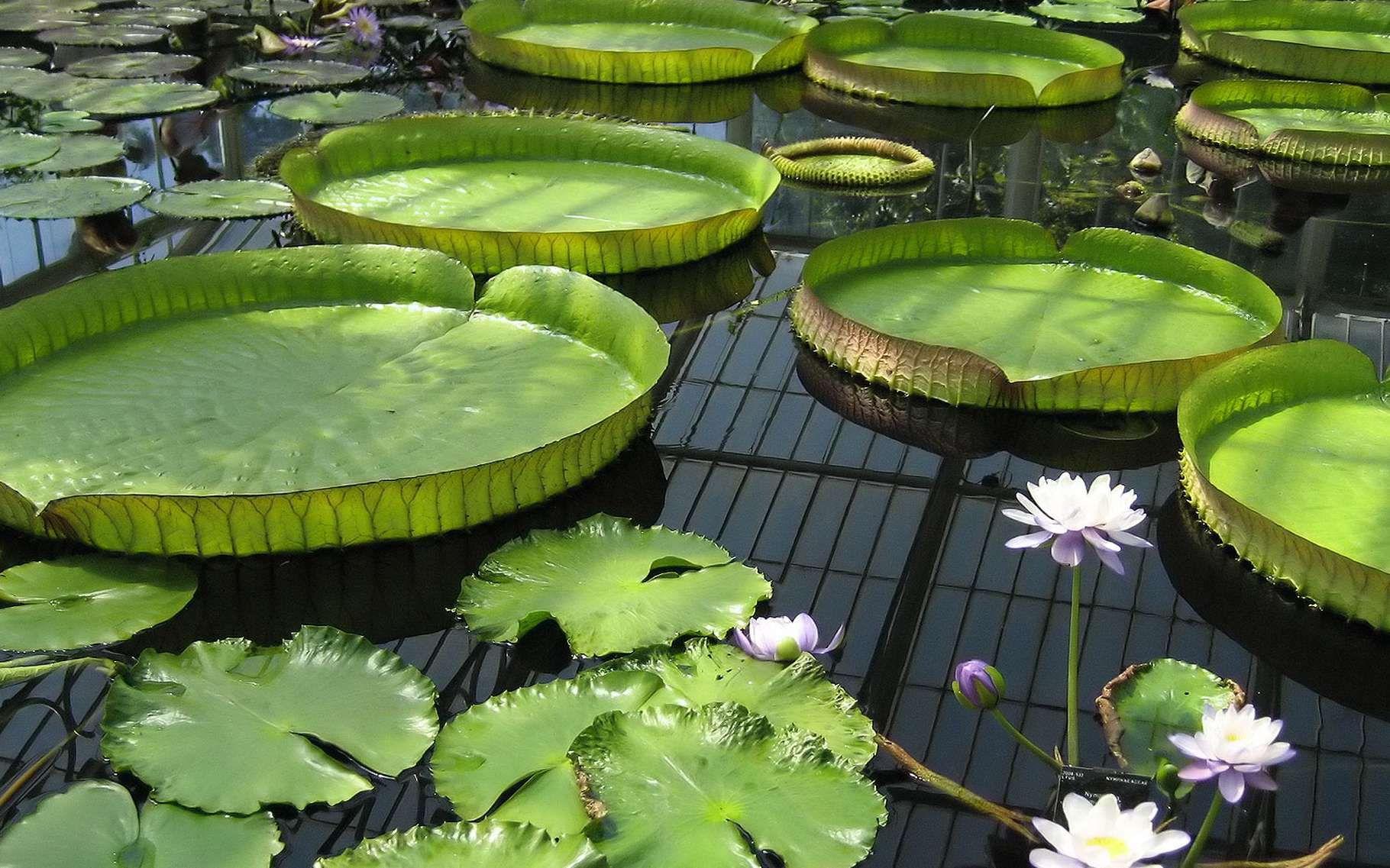 Maintenir Une Eau De Bassin Limpide Et Pure | Bassin De ... pour Bassin De Jardin Préformé
