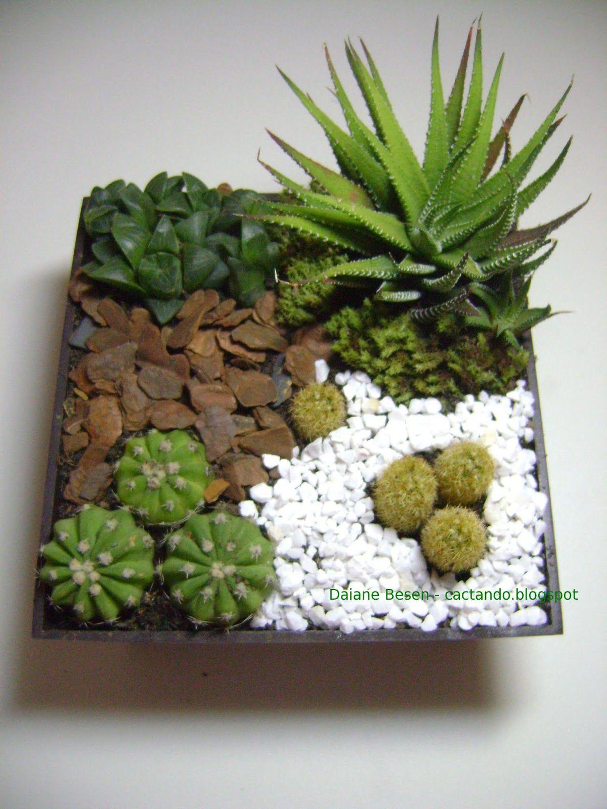 Maio 2013   Succulent Gardening, Cacti And Succulents ... dedans Jardin Cactus Miniature
