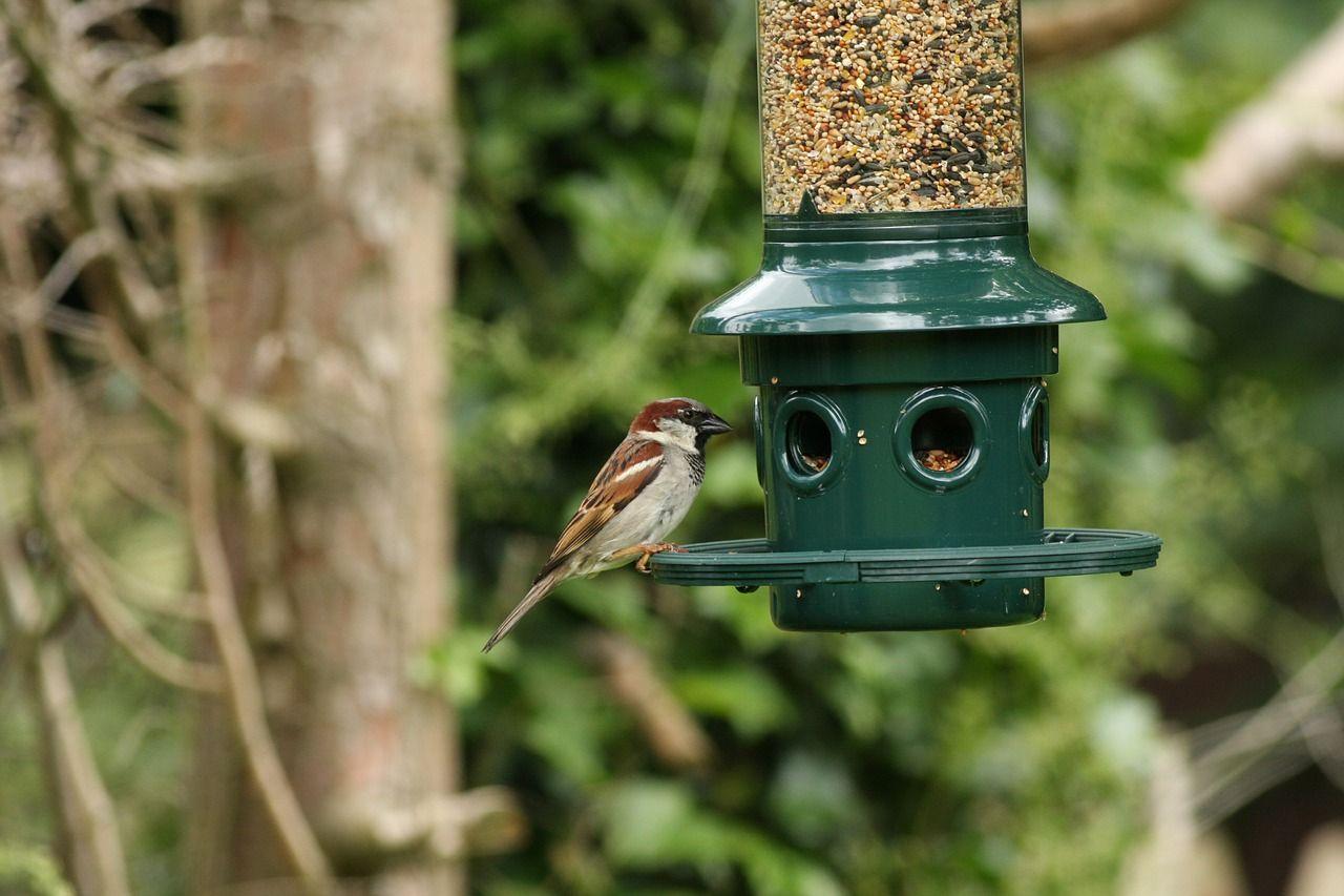 Mangeoires Pour Oiseaux : Nourrir Les Oiseaux De Votre Jardin tout Abri Oiseau Jardin