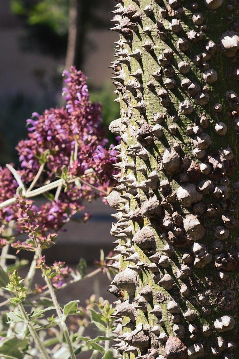 Marrakech : Un Jardin Secret Qui Vaut Le Détour ! | Jardins ... intérieur Ecorces Jardin