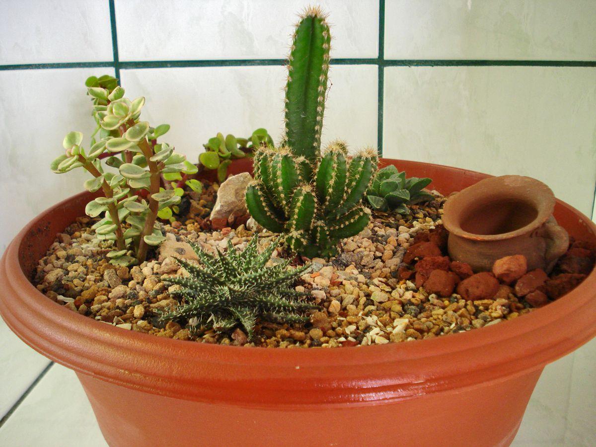 Mi Mini Jardin De Cactus ! =P   Minijardins, Idéias De ... dedans Jardin Cactus Miniature