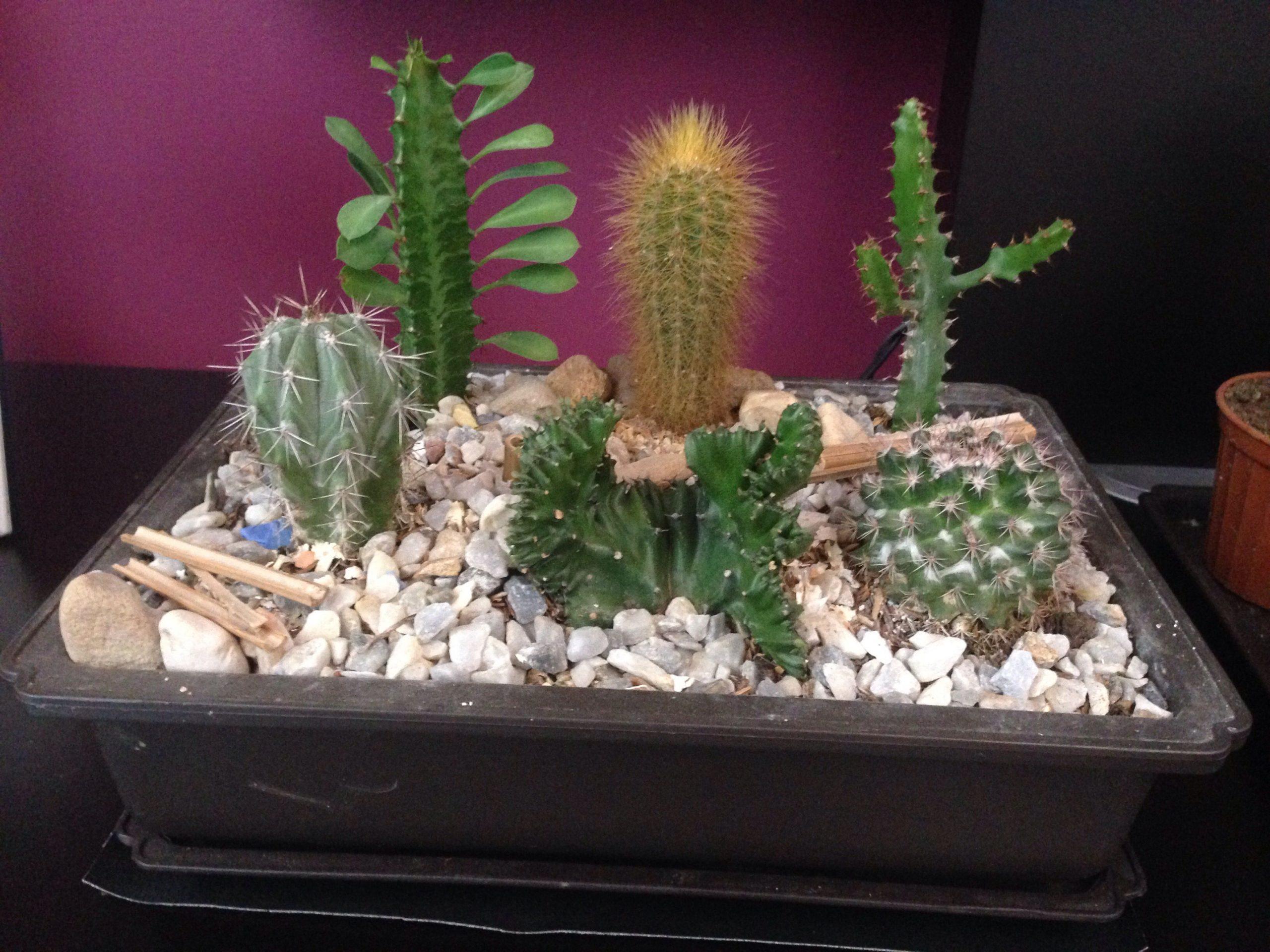 Mini Jardín Cactus🌵🌱🌵   Decoración Cactus, Cactus, Mini ... à Jardin Cactus Miniature