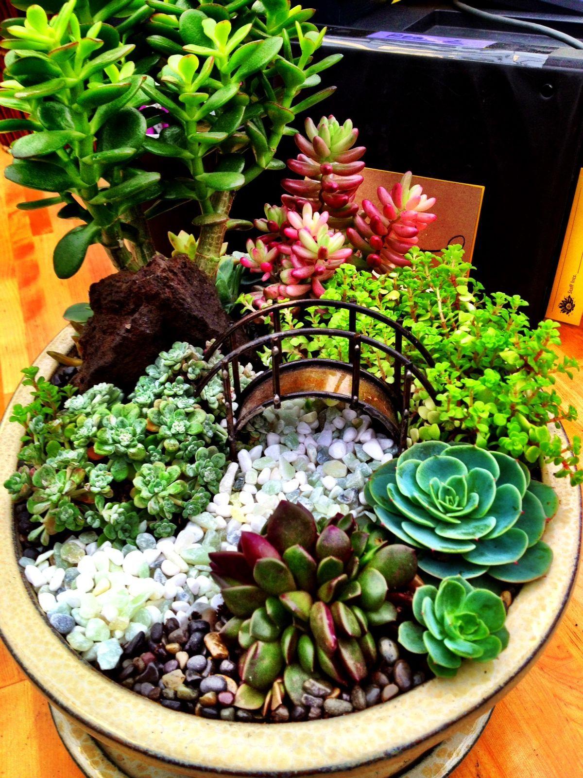 Miniature Succulent Garden With Bridge By Cornell Farm ... encequiconcerne Jardin Cactus Miniature