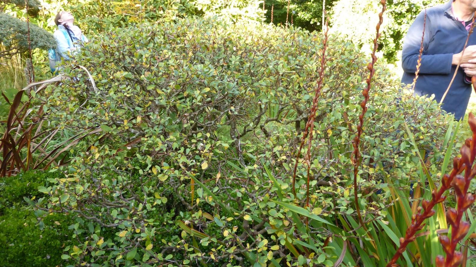 Mon Jardin Entre Terre Et Mer: Octobre 2015 avec Haie De Jardin Pousse Rapide