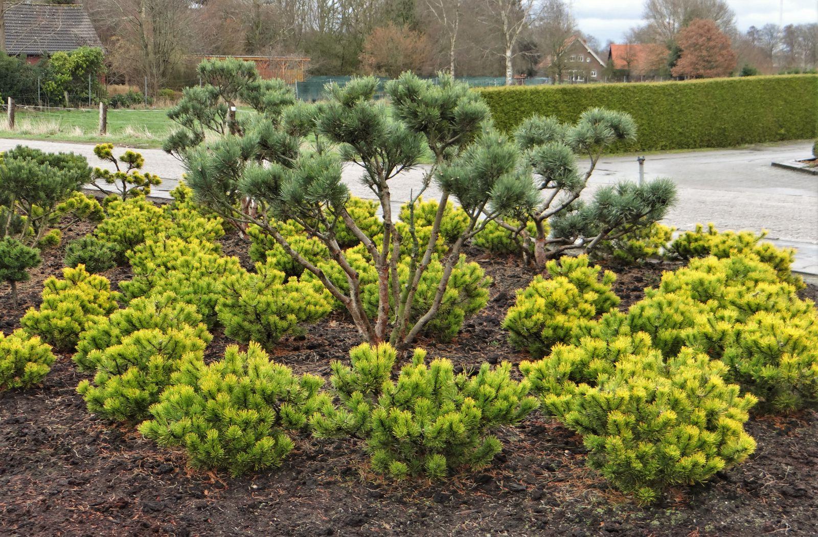 Mundi Plantarum concernant Bordure De Jardin Beton 1M