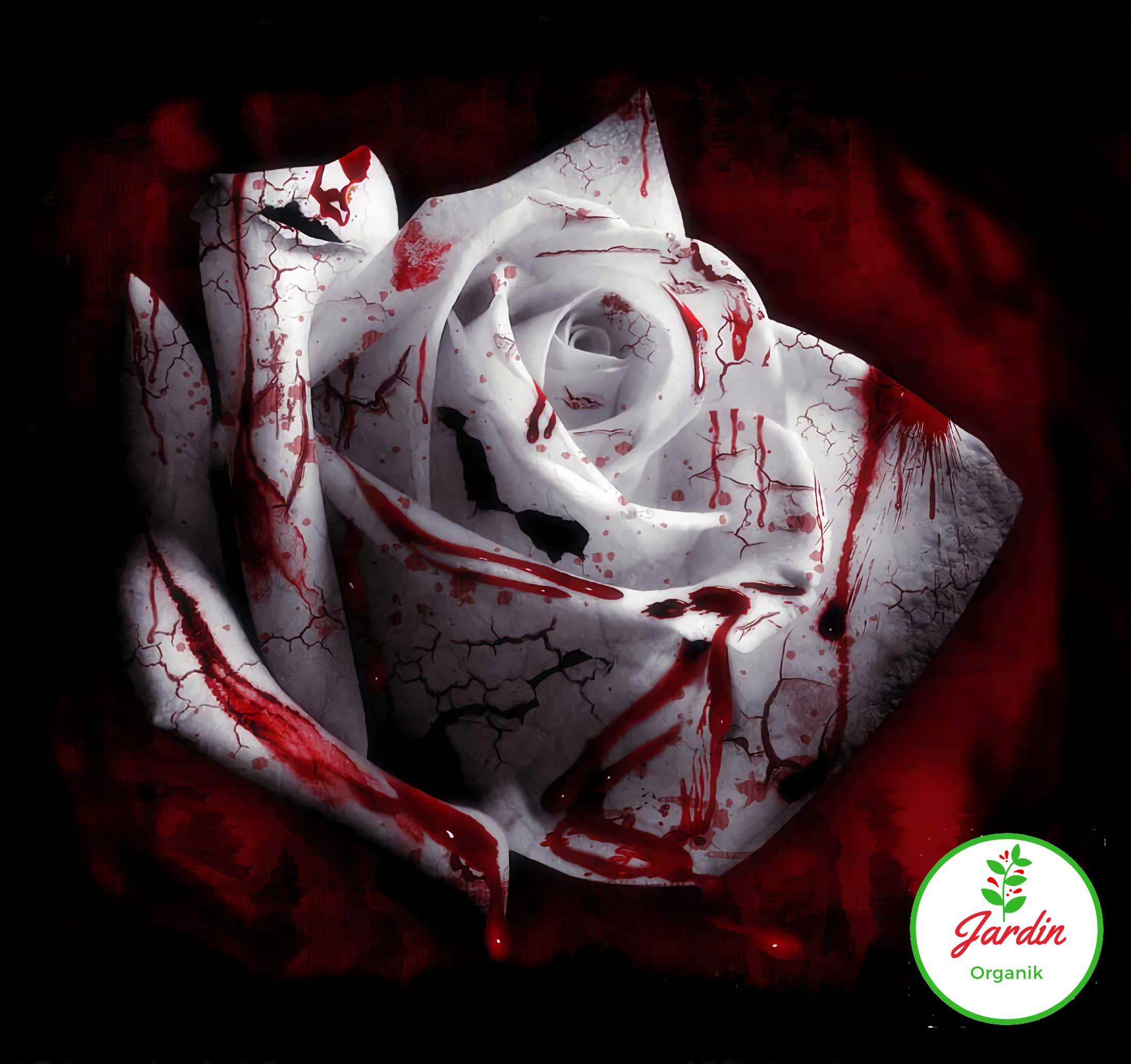 Nadir Bloody White Gül 15+ Adet Tohum Al Saksi+Torf Hediye Ev Bahçe İçin  İdeal En Uygun Fiyat avec Perlite Jardin