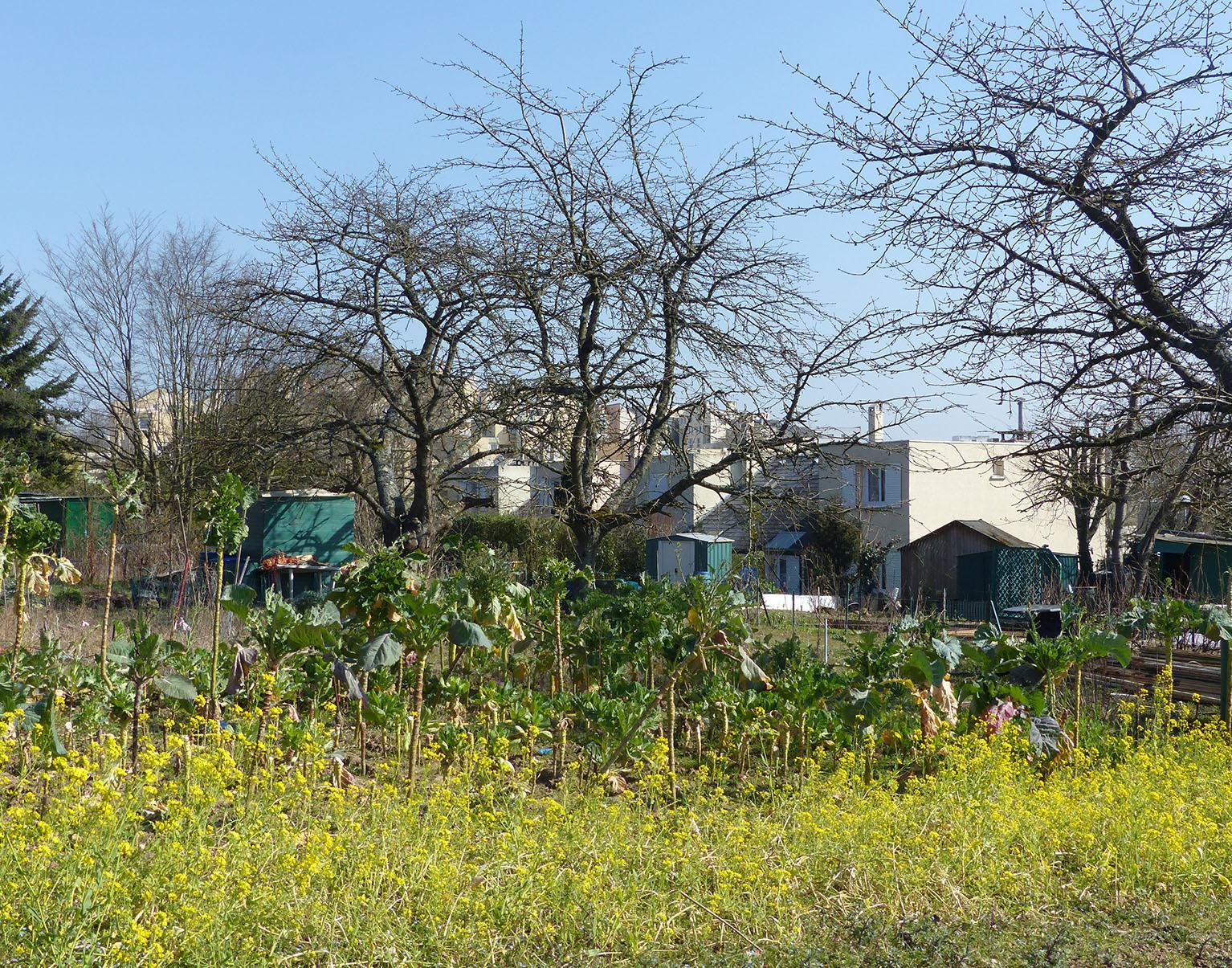 Nature En Ville À Cergy-Pontoise | De La Sciure Pour Le Jardin concernant Copeaux De Bois Jardin