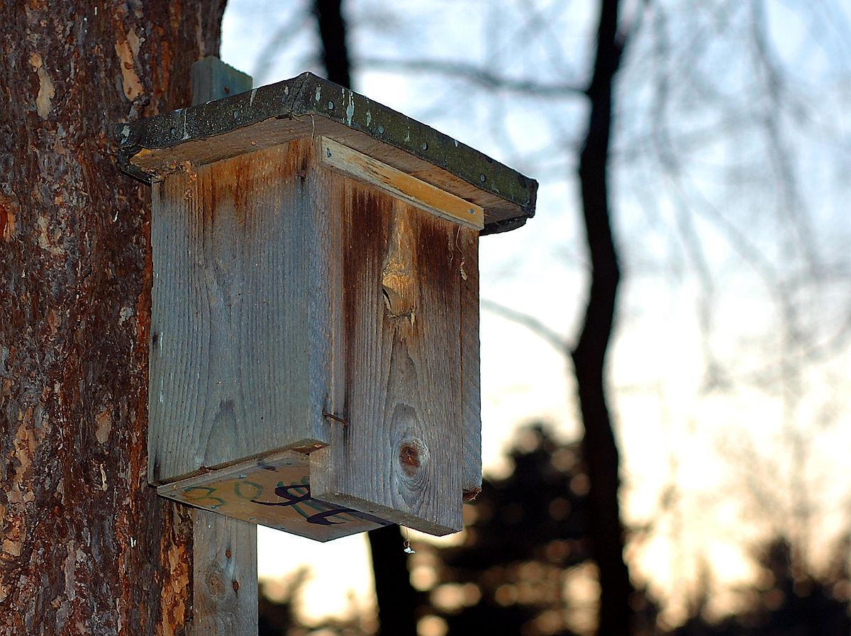 Nichoir — Wikipédia dedans Abri Oiseau Jardin
