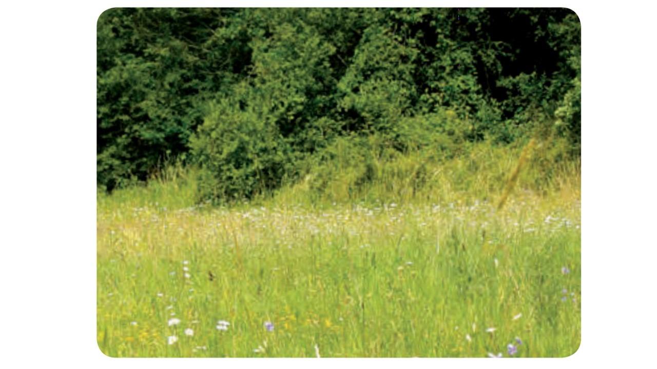 Nos Jardins Écologiques - Biodiversité - Abeillus avec Jardins Écologiques