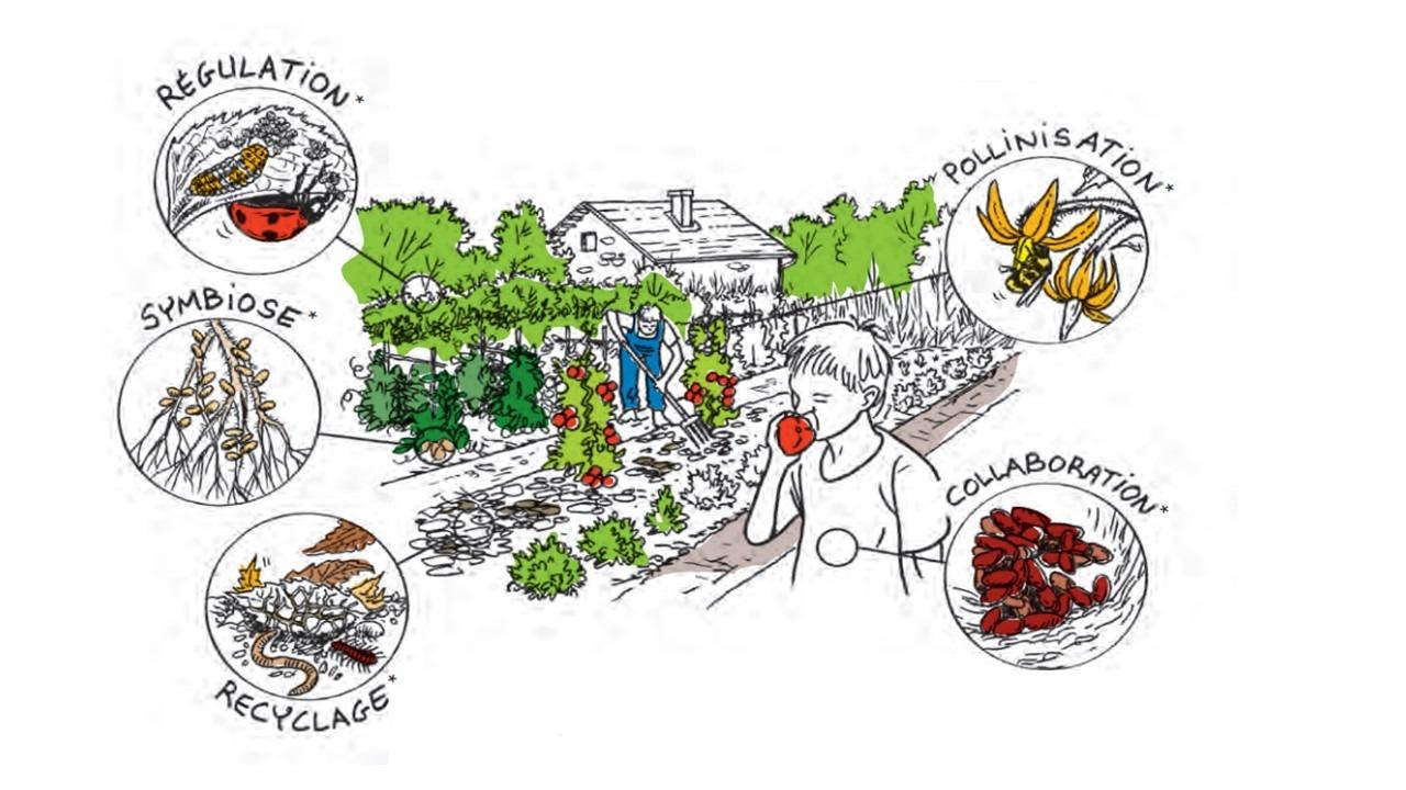 Nos Jardins Écologiques - Biodiversité - Abeillus dedans Jardins Écologiques