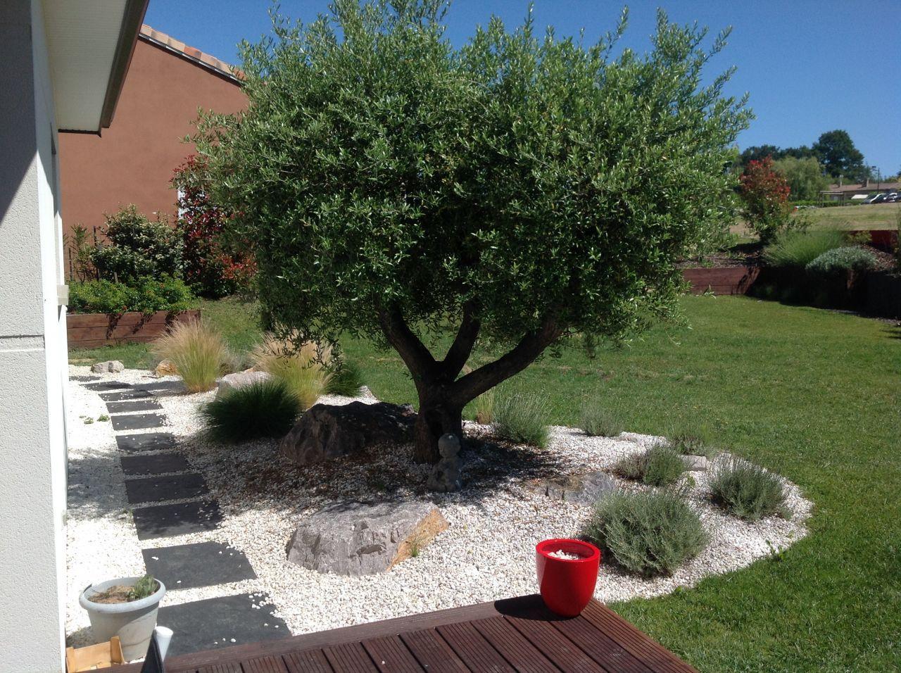 Notre Olivier ! | Amenagement Jardin, Jardin Exterieur ... intérieur Decoration Minerale Jardin