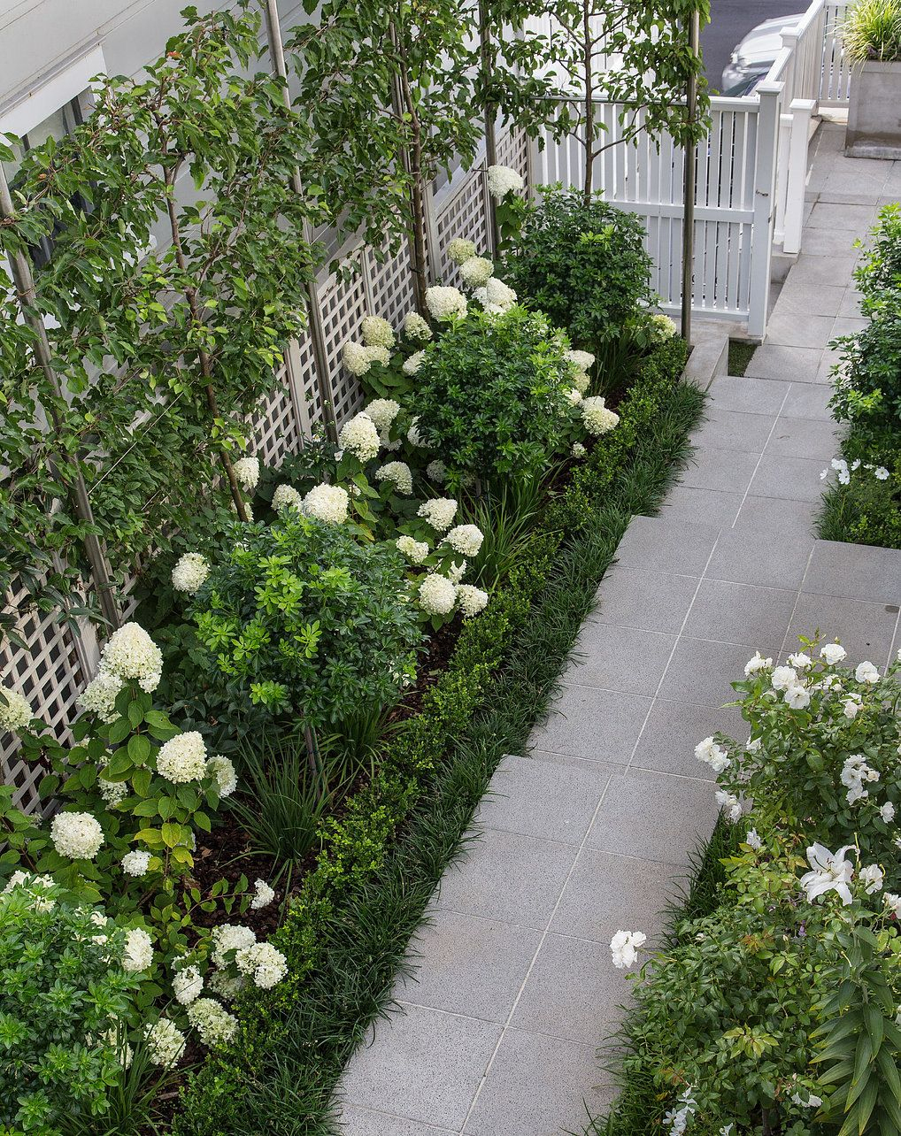 Ornamental Pleached Pears, White Hydrangea Limelight ... destiné Treillis Blanc Jardin